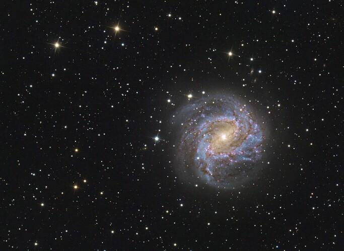 M83 Newt